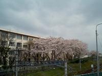 Yachiyo070331_1_1