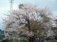 Yachiyo070331_2
